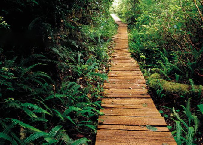 a wooden path through a jungle